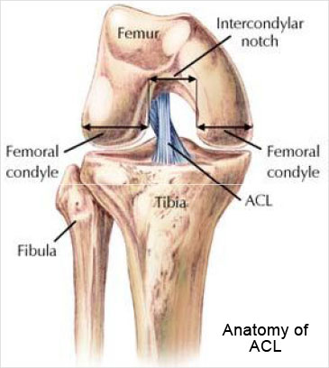 Knee Replacement Surgery by Dr. Santosh Kumar in Kolkata
